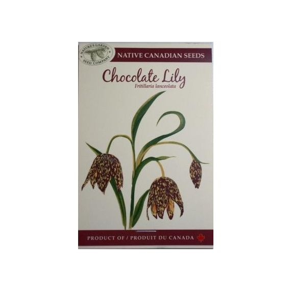 Chocolate Lily Seed